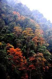 洪雅天气预报30天查询,洪雅县一个月天气